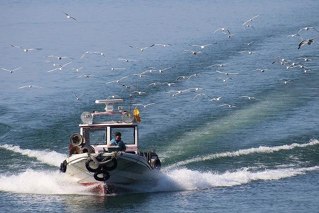ユリカモメを従え漁船は走る